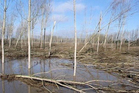 arbresderacines372959.jpg