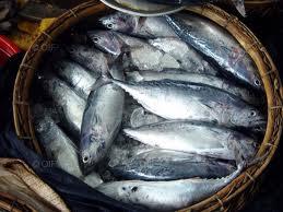 poissons2.jpg