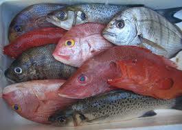poissons dans Cuisine